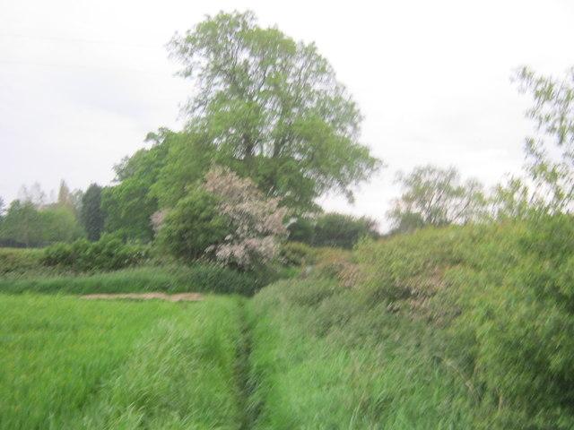 Headland footpath to Dinsdale Park Road