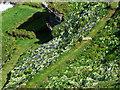 SX0489 : Tintagel Island by Chris Gunns