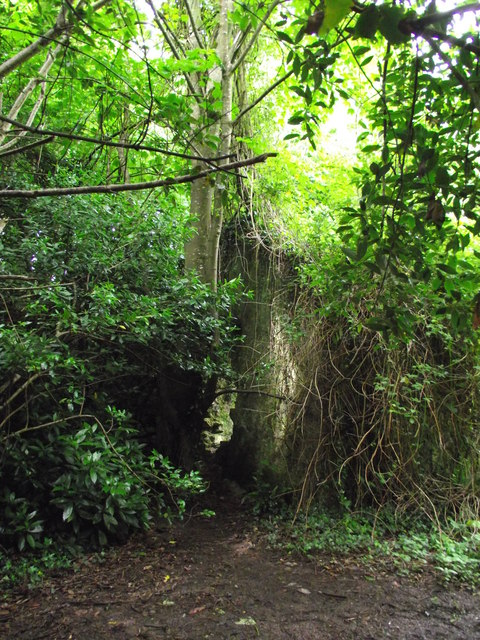 Overgrown Cottage Ruins Ballyannan Wood 169 Tim