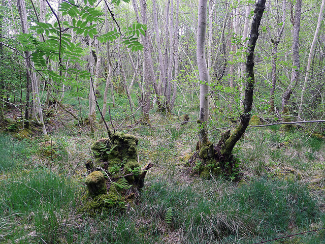 Natural woodland within the Roskill SSSI