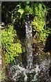 SY1888 : Water spout, Branscombe by Derek Harper
