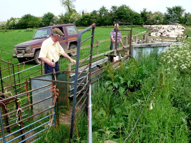 Sorting the Sheep