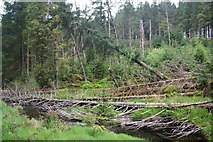 SN8587 : Fallen and leaning trees by the River Severn by Bill Boaden