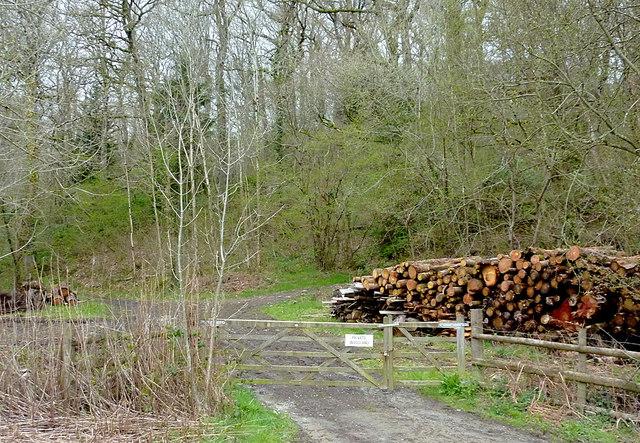 Forestry and timber near Newbridge, Powys