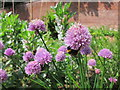 TQ8009 : Bee and flowers in Summerfield walled garden by Oast House Archive