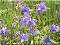 TQ0950 : Harebells by Colin Smith