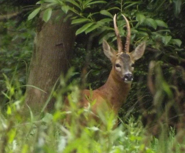 Pleased to Meet You, Deer