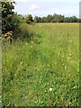 NZ3071 : Meadow by Christine Westerback