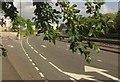 SX8966 : Plums by Riviera Way by Derek Harper