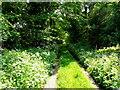 SP3362 : Shady Country Lane by Nigel Mykura