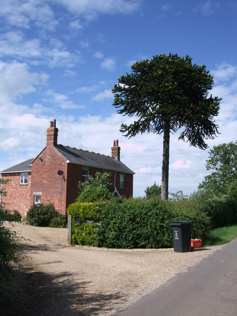 Breach Farm Cottage, with monkey puzzle tree
