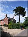 SU2184 : Breach Farm Cottage, with monkey puzzle tree by Vieve Forward