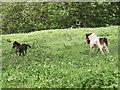 TQ4780 : Running foals by Stephen Craven