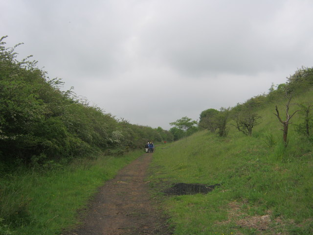 Footpath in disused railway cutting
