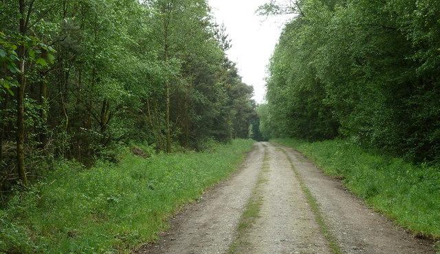 Forest track, Matlock Moor