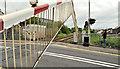 C8533 : Calf  Lane level crossing, Coleraine (2) by Albert Bridge