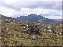 NG9779 : Rowan on boulder by Sally