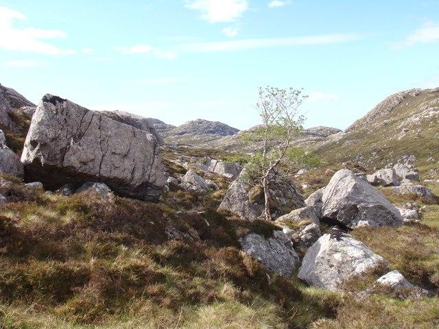Rowan in boulders