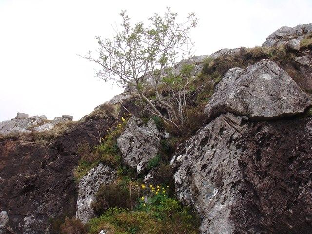 Globeflower crag