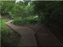 SX8963 : Boardwalk in Cockington Meadows by David Smith