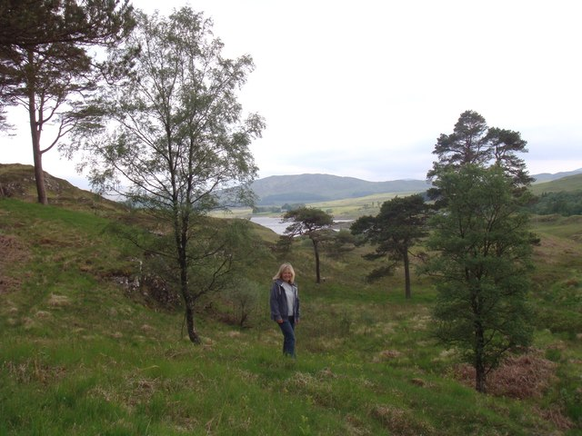 Ness Glen woodland