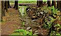 J3246 : Trees and sheugh, Drumkeeragh forest (2) by Albert Bridge