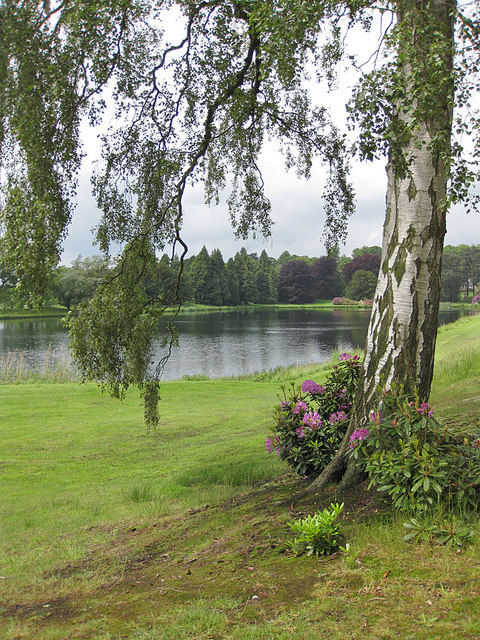 Birch tree on the banks of South Lake