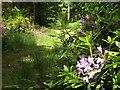 TQ0950 : Upper Weston Wood by Colin Smith