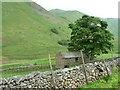 NY4216 : The first and last tall tree in Bannerdale by Christine Johnstone