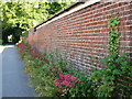 TG3923 : Valerian lines the wall at Mill Farm by don cload