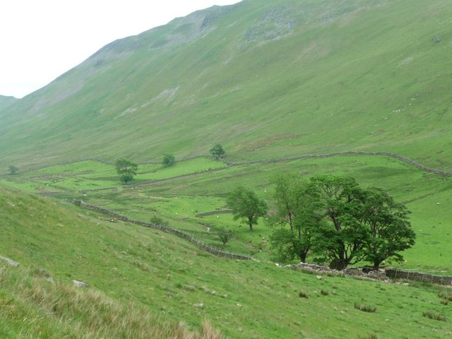Boredale's first or last tall trees