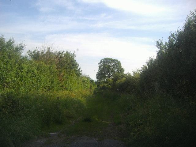 Farm track past Landwick farm