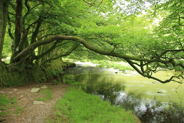 Overhanging Trees On The River Barle 169 Guy Wareham Cc By