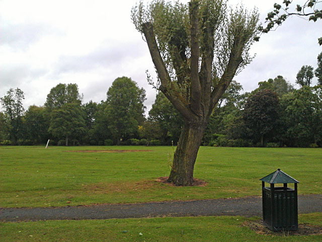 Pollarded willow in West Park