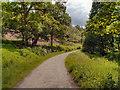 SJ9581 : Hase Bank Wood by David Dixon