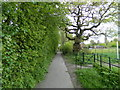 SK4252 : Riddings Park, footpath by Rob Howl
