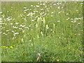 TQ0349 : Chalk Grassland, Albury Downs by Colin Smith