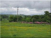 NO0001 : Field, Yetts o' Muckhart by Richard Webb