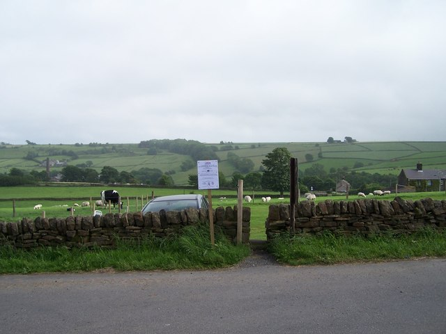Is that Molly in the field?     Our Cow    © Terry Robinson