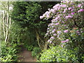 SU8129 : Sussex Border Path by Colin Smith