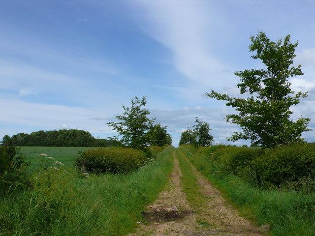 Track on Tetbury Common