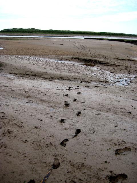 Scolt Head Island Traverse 11a: Muddy section south of  Norton Creek