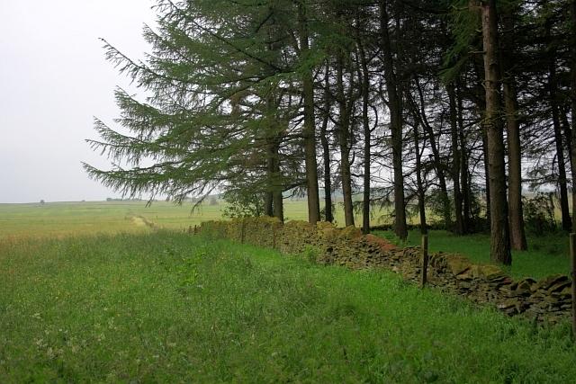 Edge of Shillito Wood