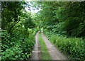 SE9627 : Track, known as Bow Road, through Bow Plantation by Neil Oakes