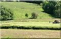SN9867 : Red kite feeding time, Gigrin Farm, Rhayader by Jaggery