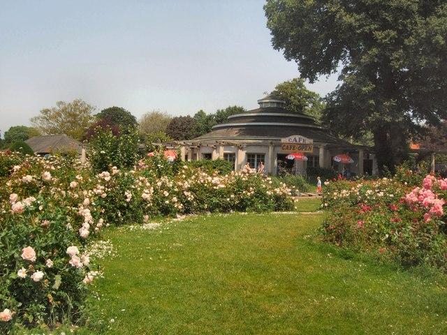 Scented Rose Garden