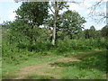 SU9569 : Windsor Great Park by Alan Hunt