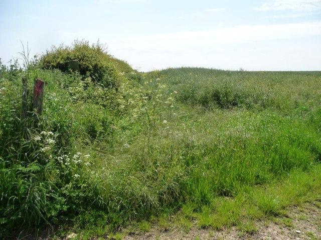 Eastern boundary of an oilseed rape field