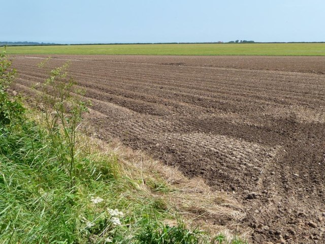 Partly bare field, south of Grindale Road