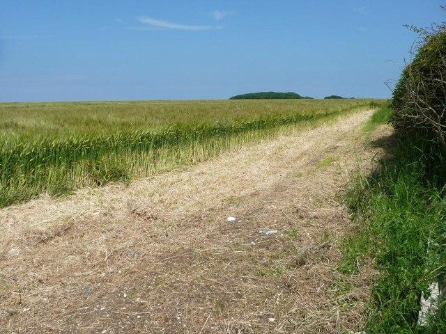 South-eastern edge of large barley field